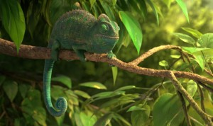 our_wonderful_nature_-_the_common_chameleon_stillc